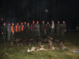 Driven Hunt In Poland 001