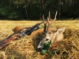 thumb Roe-Buck-Hunt-In-Poland-027